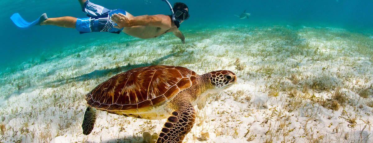 Grenadines Travel Guide